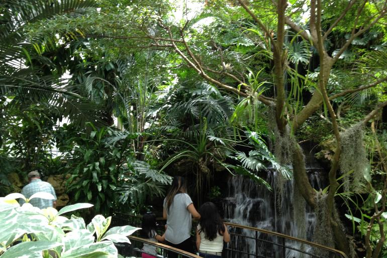 Krohn Conservatory Photo #3