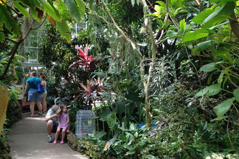 Krohn Conservatory Photo #0