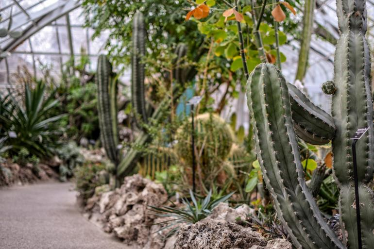 Krohn Conservatory Photo #2