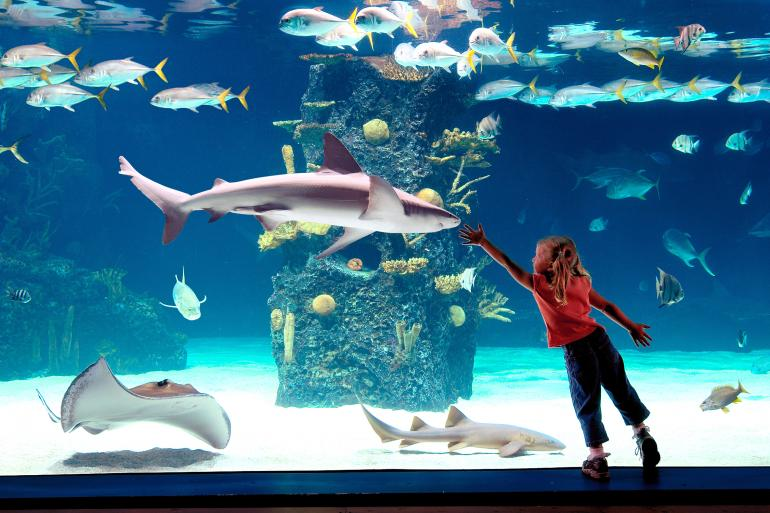 Newport Aquarium South Riverfront Cincinnati Animal - 10 awesome aquariums where you can spend the night with sharks