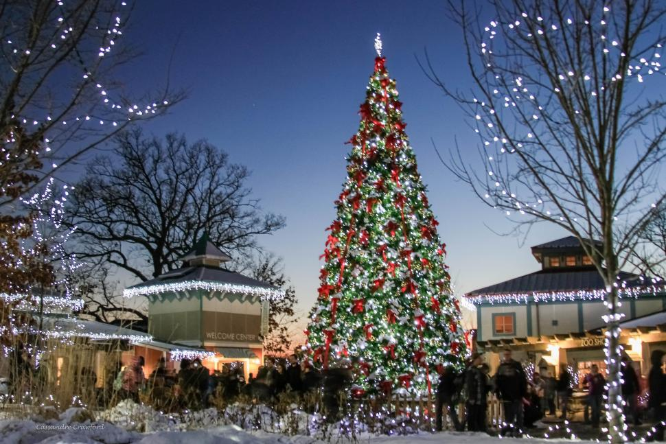 PNC Festival of Lights at Cincinnati Zoo & Botanical Garden (photo: Cassandra Crawford)