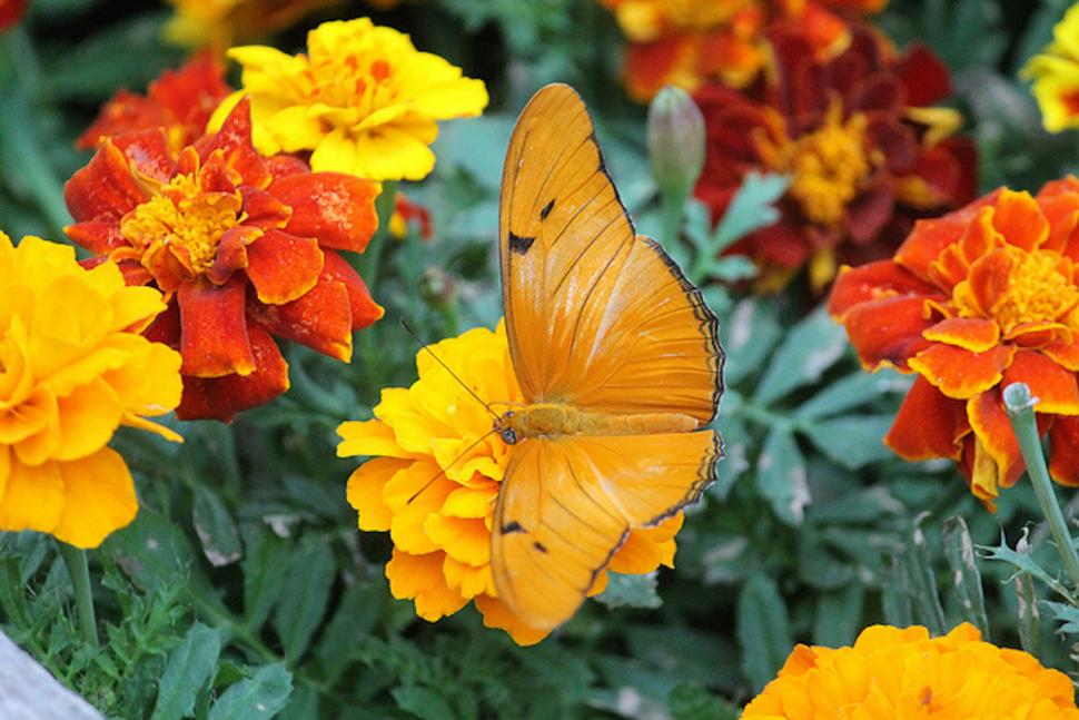 Butterfly Show at Krohn Conservatory (photo: Cincinnati Parks)