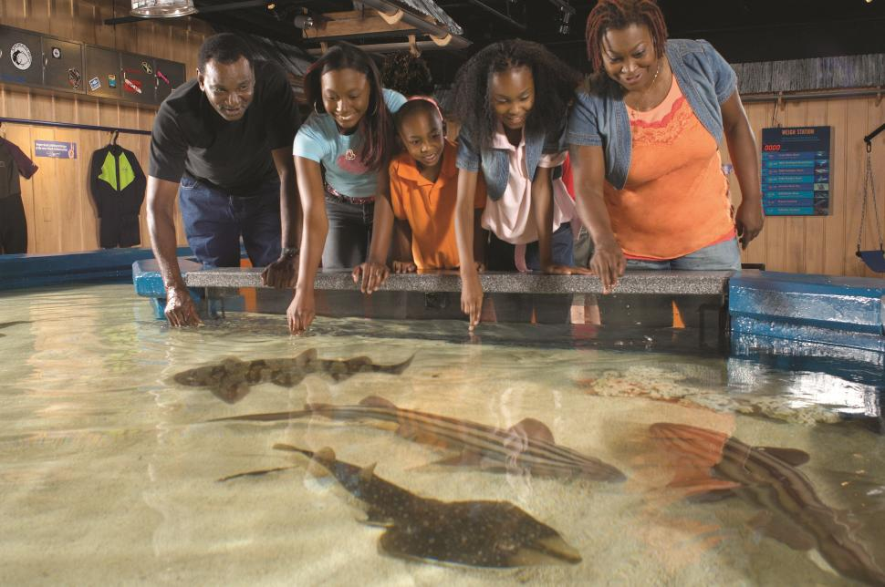 Touching sharks at Newport Aquarium (photo: Newport Aquarium)