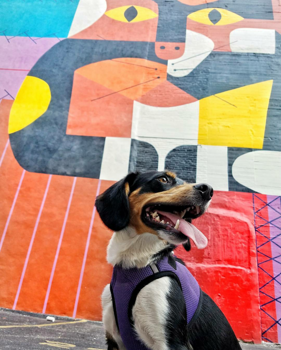 Mya exploring the murals that are all around town (photo: Abby Erwin)