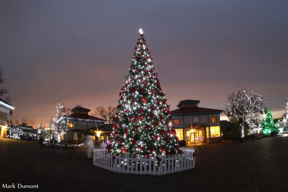 Lit up tree at PNC Festival of Lights at the Cincinnati Zoo (photo: Mark Dumont)