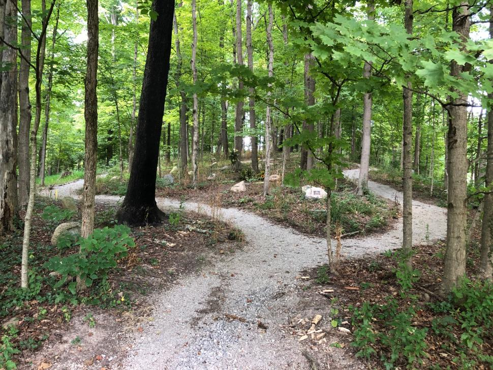 Woodland Walkway at Spring Grove Cemetery and Arboretum