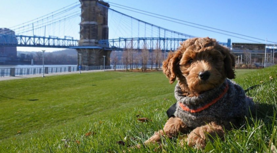 Myrtle with Roebling Suspension Bridge (photo: Phil Armstrong)