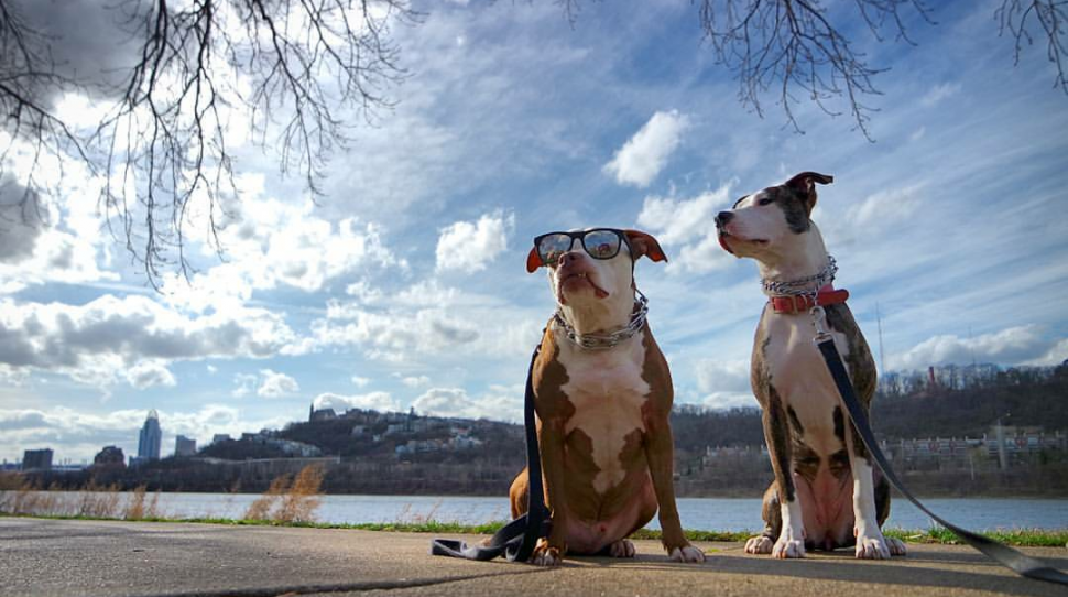 Tyson and Liddy at Bellevue Beach Park (photo: Eric Vice)