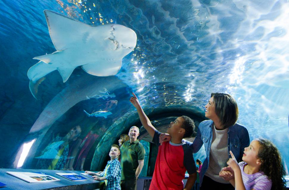 Shark Tunnel at Newport Aquarium (photo: Newport Aquarium)