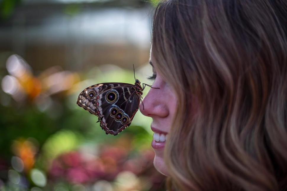 The Butterfly Show at Krohn Conservatory (photo: @mapeters25)