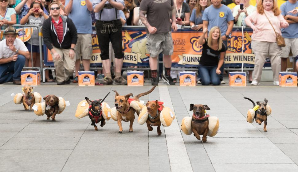 Running of the weiners at Oktoberfest Zinzinnati (photo: Brian Douglas Stills)