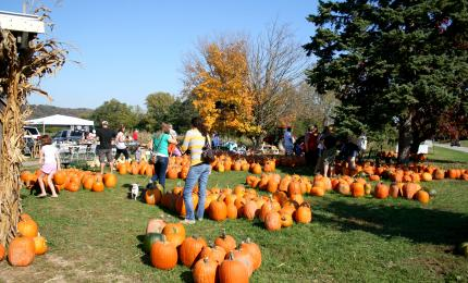 Pumpkin patch at McGlasson Farms