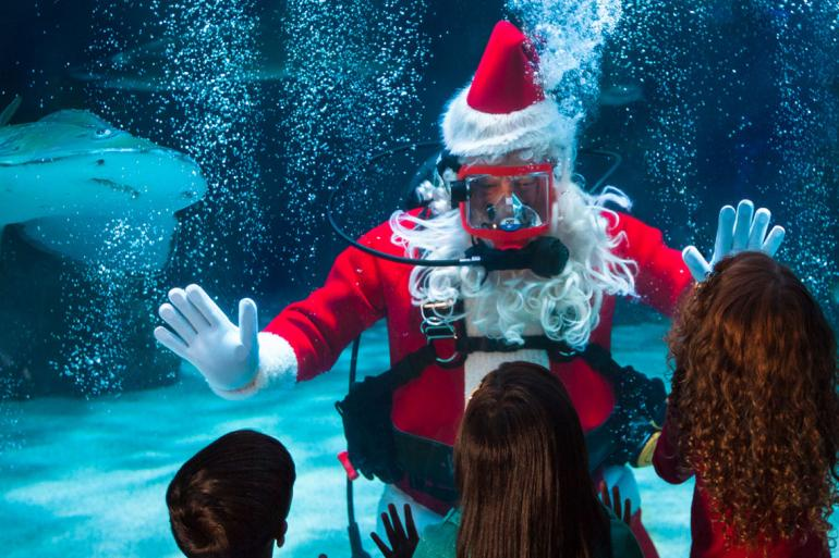 Water Wonderland with Scuba Santa Photo #0