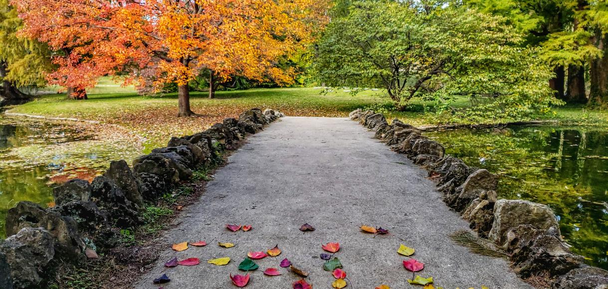 Spring Grove Cemetery and Arboretum in the fall (photo: Abby Erwin)