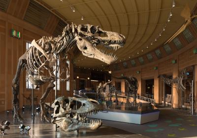Dinosaur Hall at Cincinnati Museum Center (photo: Phil Armstrong)