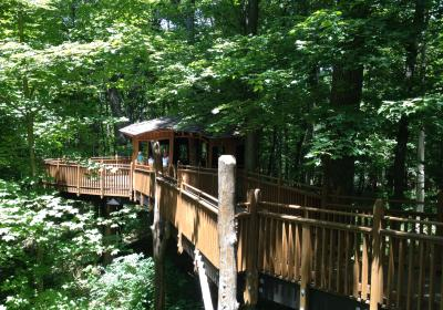 Mt. Airy Forest Treehouse (photo: CincinnatiUSA.com)