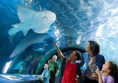 Shark Tunnel, Newport Aquarium