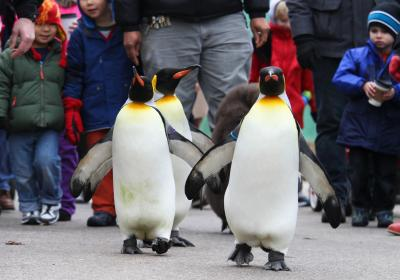 Penguin Days at Cincinnati Zoo