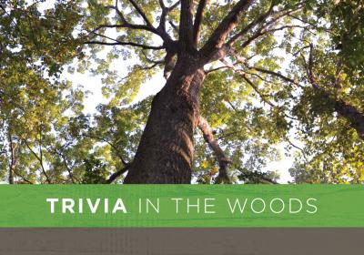 Trivia in the Woods