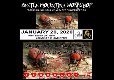 Beetle Mounting Workshop