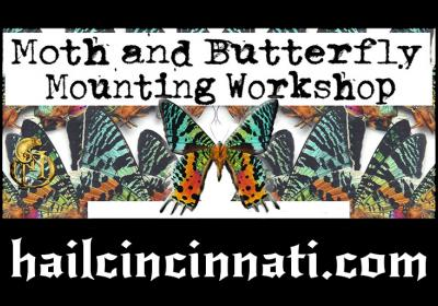 Butterfly & Moth Pinning Workshop