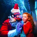 Water Wonderland with Scuba Santa at Newport Aquarium