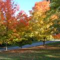 Alms Park in the fall