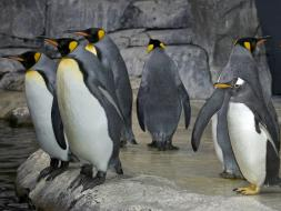 Kroger Penguin Palooza at Newport Aquarium
