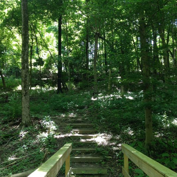 Mt. Airy Forest