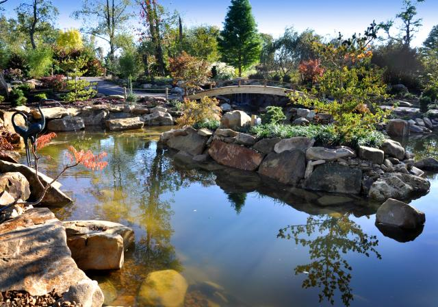 Creation Museum Koi Pond (photo: Creation Museum)