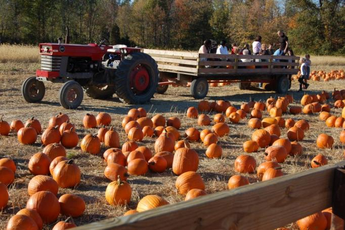 Fall on the Farm (photo: Blooms and Berries Farm Market)