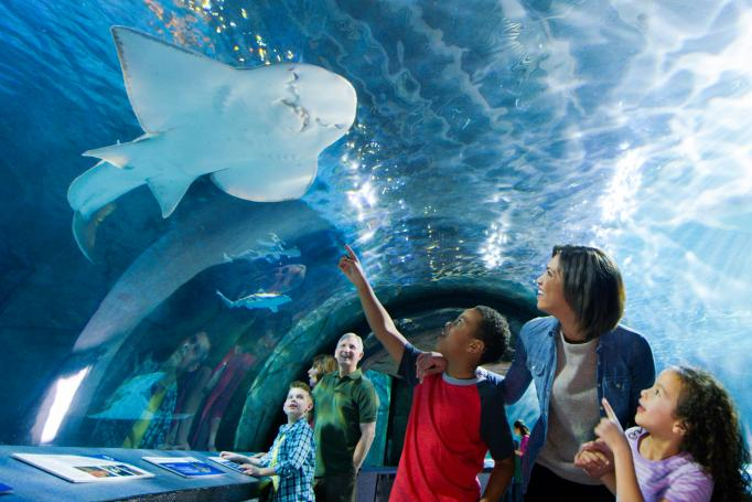 Shark Tunnel, Newport Aquarium in Cincinnati